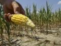 В США из-за сильнейшей за 10 лет засухи фермерам разрешили брать дешевые кредиты