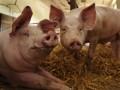 К памятнику Ахмату Кадырову в Москве подбросили свиные головы