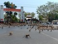 Сотни голодных обезьян устроили драку в Таиланде