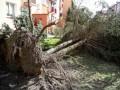 В Польше из-за ураганов без света остались более 11 тысяч домохозяйств