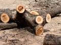 В Украине выросла незаконная вырубка лесов