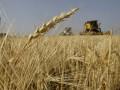 Украинцы начинают есть меньше хлеба: в этом году его производство может упасть на 10%