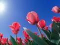 Праздники 17 апреля: интересные факты и народные приметы
