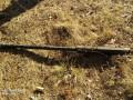 Пограничники нашли пулемет у границы с Россией