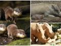 Животные недели: Детеныши выдры, поросятки бабируса и носороги-именинники