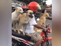 На Филиппинах собак приучили ездить на скутере