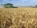 Украина собрала 8 млн тонн зерна - премьер