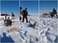 Волк притворился мертвым и напал на охотников