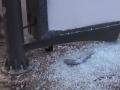 Во Львове вандалы уничтожили четыре остановки за ночь