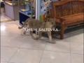 В ТРЦ Харькова на свободу вырвался львенок