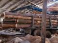 На Львовщине лесники вырубили почти 300 деревьев