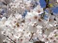 3 апреля: какой сегодня праздник, традиции