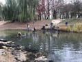 В парке на Осокорках проводят операцию по спасению черепах
