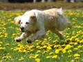 Киев разъяснил порядок поездок в Крым с животными