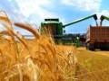ТОП-5 крупнейших налогоплательщиков в агропродовольствии