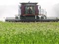 Эксперты пророчат производителям зерна многомиллиардные убытки