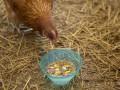 Украина запретила импорт птицы из Германии