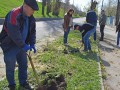 Горсовет Харькова закупил деревья по 300 тысяч за штуку - СМИ