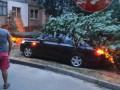 По нескольким областям пронесся ураган: Повалены деревья, оборваны провода