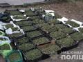 В Запорожской области разоблачили наркокартель