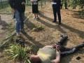 В Барышевке торговал оружием глава районной ячейки общественной организации