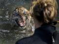 Животные недели: тигренок в воде и котенок в пепле