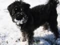 В Киевской области открыли дело за издевательства над собакой