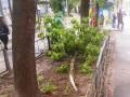 В Киеве ветер свалил около 40 деревьев