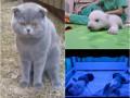 Хорошие новости: обморок будущего отца, обиженный кот и взросление полярного мишки