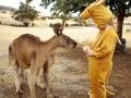 Кенгуру приняли девочку в маскарадном костюме за свою (ФОТО)