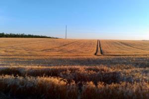 Минагрополитики ожидает рекордный урожай зерновых