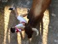 В забеге быков в Испании пострадали 28 человек