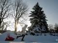 В Виннице отменили главную елку из-за COVID-19
