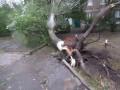В Ивано-Франковской области на 8-летнего мальчика упало дерево