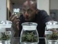 На Ямайке можно будет хранить марихуану в религиозных, научных и медицинских целях