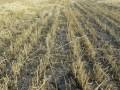 Обеспокоившись судьбой строительства в Киеве, Янукович ветировал отсрочку отвода земельных участков
