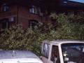 В Киеве дерево рухнуло на шиномонтаж