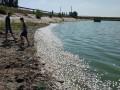 В реке под Кривым Рогом произошел массовый мор рыбы
