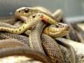 Американские полицейские обнаружили в доме школьного учителя сотни змей