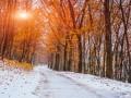 Снег после 20 октября: Синоптики назвали дату похолодания