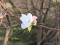 Теплая осень: В Бердянске зацвели сливы и яблони