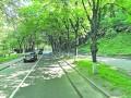 На Парковой дороге вырубят деревья, чтобы не было оползней