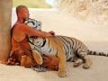 Мой ласковый и нежный зверь: ФОТО ручных тигров