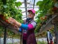 Финляндия готовит чартеры для сезонных рабочих из Украины