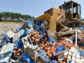 За пять лет в России уничтожили 36 тысяч тонн санкционных продуктов