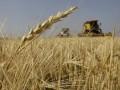 Украина отказалась от закупок гороха и твердых сортов пшеницы