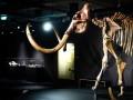 Во Франции за €548 000 продали скелет мамонта