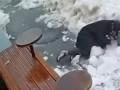 Появилось видео, как на женщину в Киеве упала глыба снега и льда