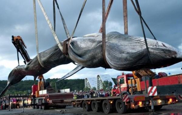 Суд ООН обязал Японию прекратить охоту на китов