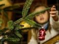 Гослесагентство начало продавать праздничные елки со спецплантаций